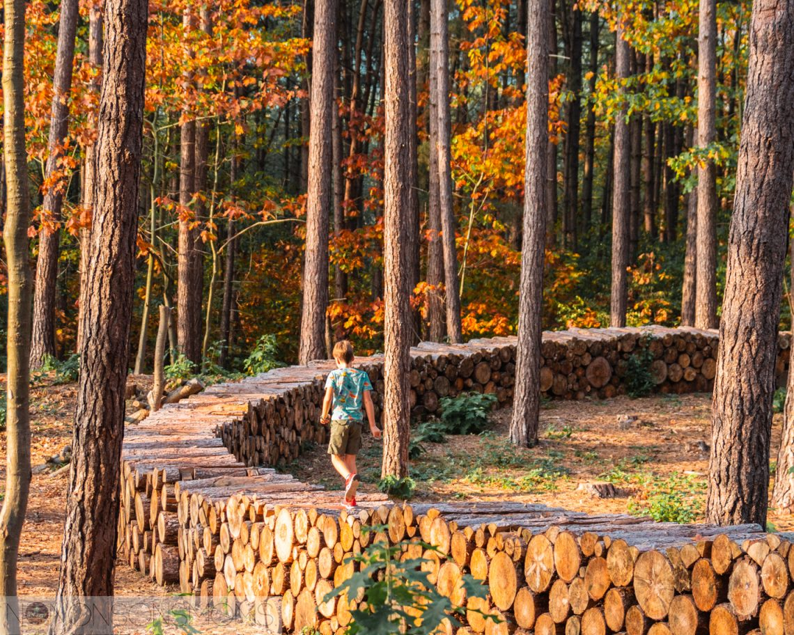 week van het bos - traag leven